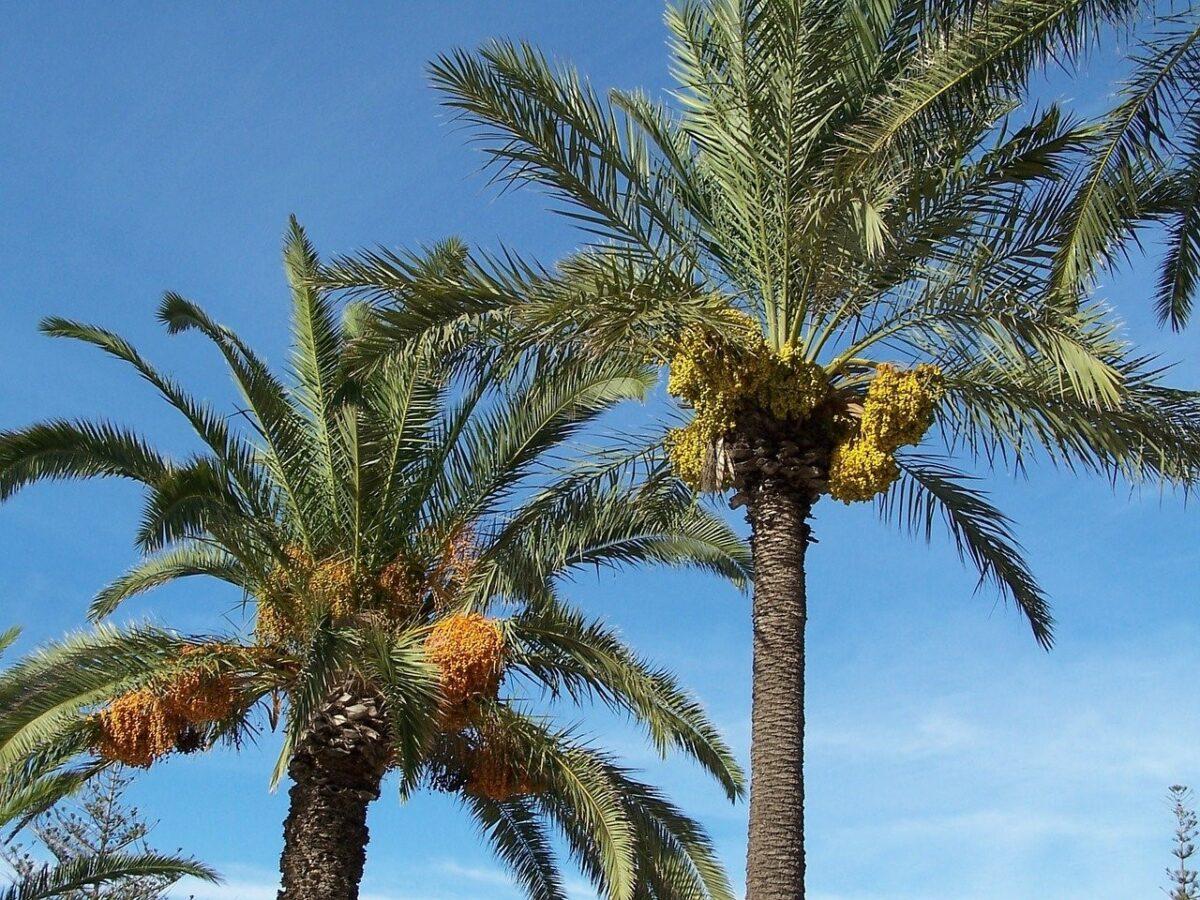 Les 10 principales plantes du désert libyque